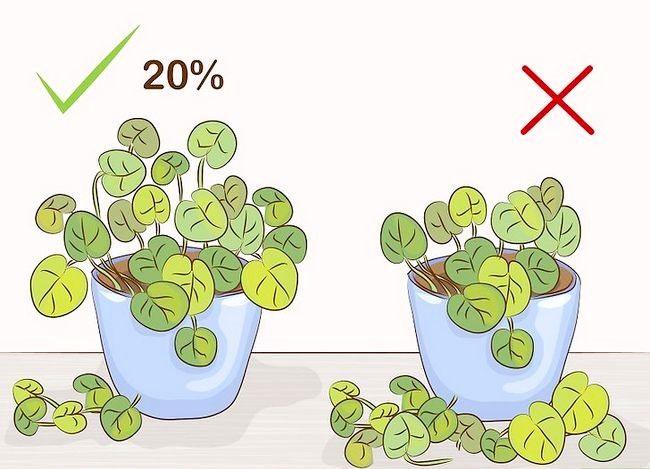 Prentjie Prune Huisplante Stap 8