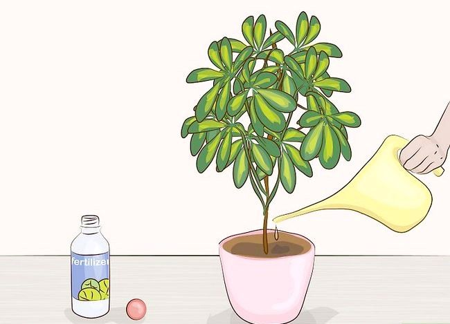 Prentjie Prune Huisplante Stap 9