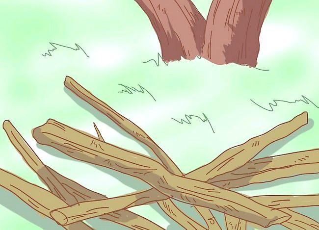 Prent getiteld Prune a Lemon Tree Stap 3