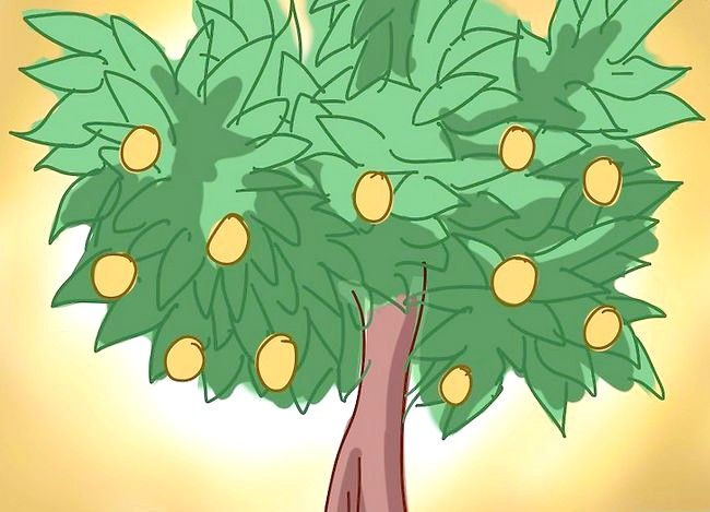 Prent getiteld Prune a Lemon Tree Stap 6