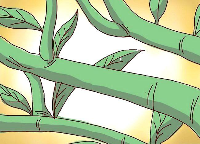 Prent getiteld Prune a Lemon Tree Stap 9