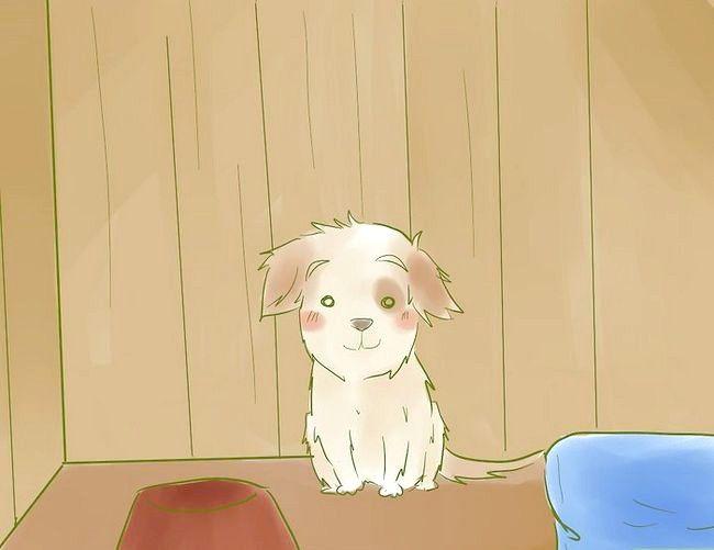 Prent getiteld Stel `n nuwe hondjie in vir die Resident Cat Step 1