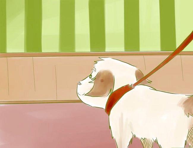 Prent getiteld Stel nuwe Puppy bekend vir die Resident Cat Step 2