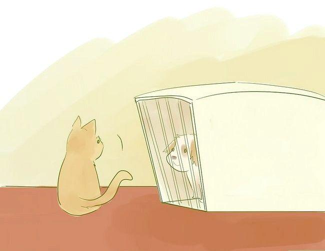 Prent getiteld Stel nuwe Puppy bekend vir die Resident Cat Step 4
