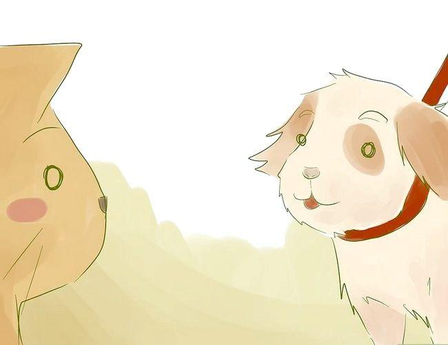 Prent getiteld Stel nuwe Puppy bekend vir die Resident Cat Stap 5