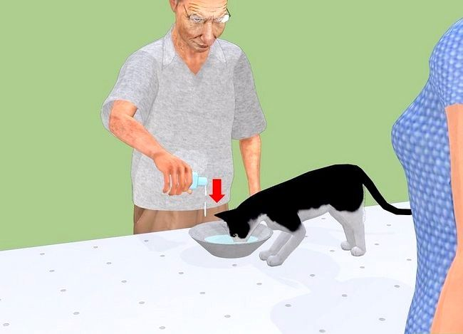 Prent getiteld Voorkom Stones in Katte Stap 13