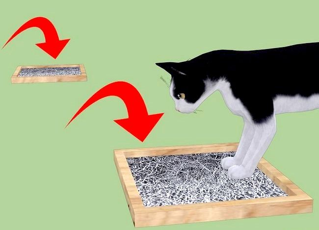 Prent getiteld Voorkom Stones in Katte Stap 8