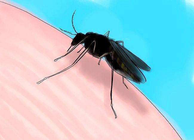 Prent getiteld Voorkom West Nile Virus Stap 3
