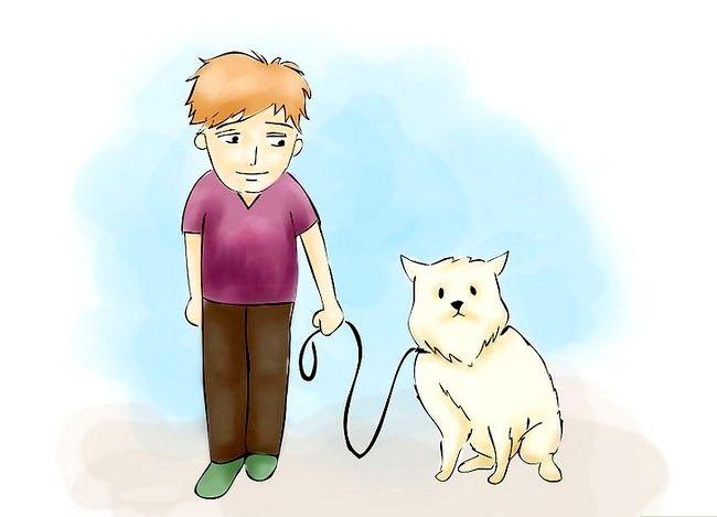 Beeld getiteld Verhoed `n Hondsdolheid Infeksie Stap 02