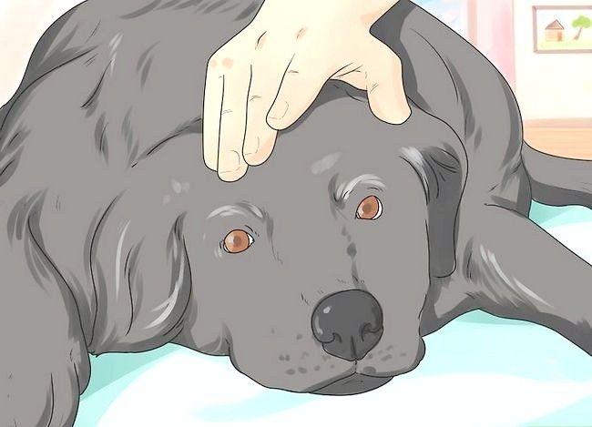 Prent getiteld Comfort a Dying Dog Stap 1