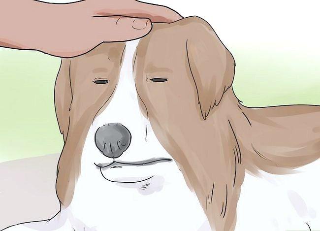 Prent getiteld Comfort a Dying Dog Stap 16