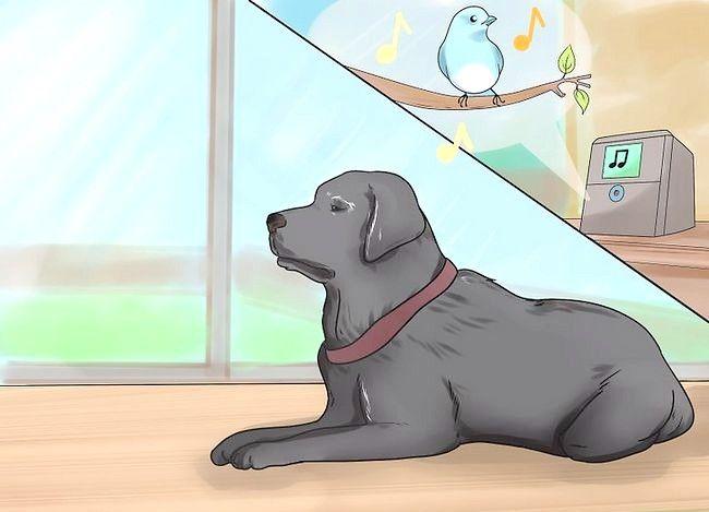 Prent getiteld Comfort a Dying Dog Stap 2
