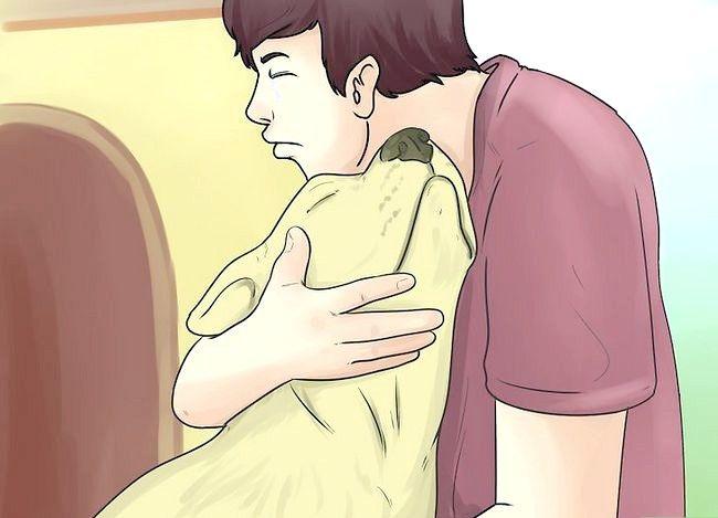 Prent getiteld Comfort a Dying Dog Stap 8