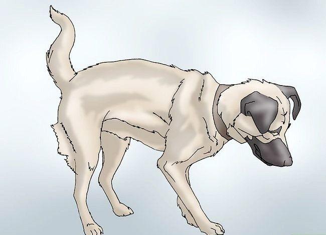Hoe om die tekens van hipdysplasie in honde te herken