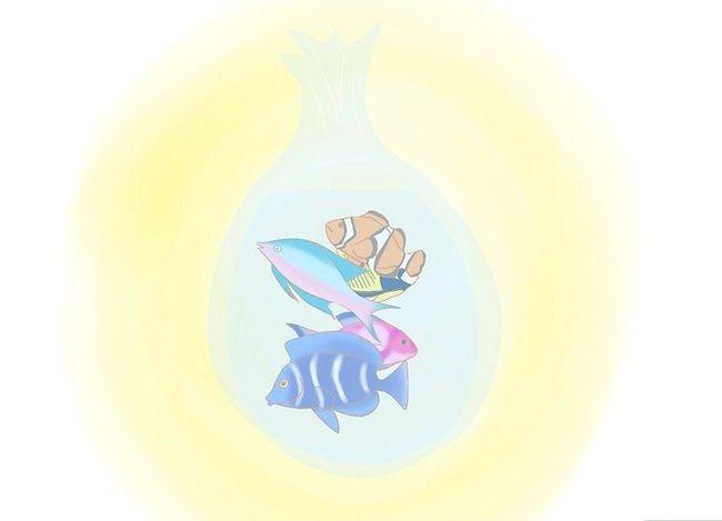 Prent getiteld Verminder Soutwater Reef Aquarium Onderhoud Stap 1