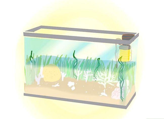 Prent getiteld Reduce Saltwater Reef Aquarium Onderhoud Stap 3