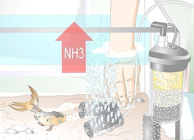 Prent getiteld Laer Ammoniak Vlakke in `n Vistenk as hulle nie baie hoog is nie. Stap 6