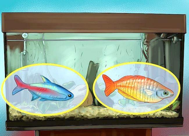 Prent getiteld Hoeveel vis kan jy in `n vistenk plaas? Stap 3