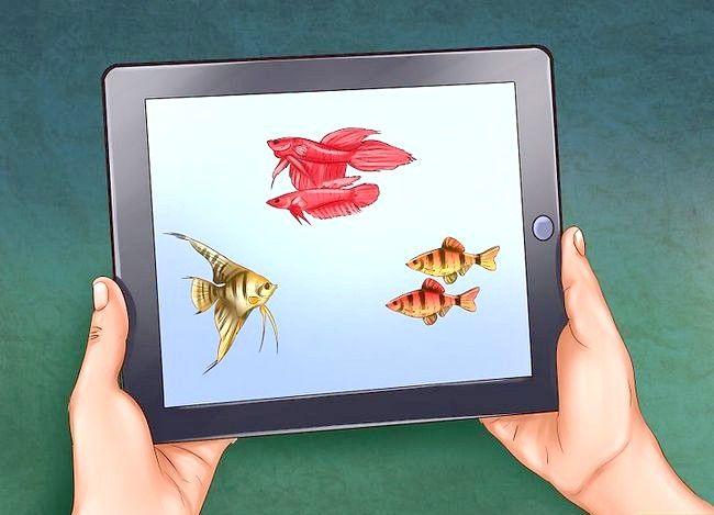 Prent getiteld Hoeveel vis kan jy in `n vistenk plaas? Stap 5