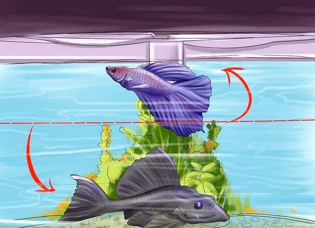 Prent getiteld Hoeveel vis kan jy in `n vistenk plaas? Stap 6