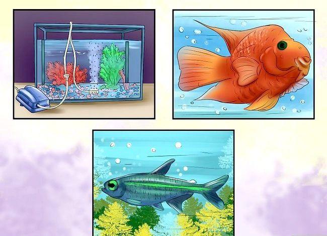 Prent getiteld Hoeveel vis kan jy in `n vistenk plaas? Stap 8
