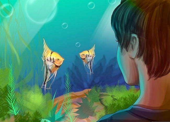 Prent getiteld Vertel die Geslag van `n Angelfish Stap 6