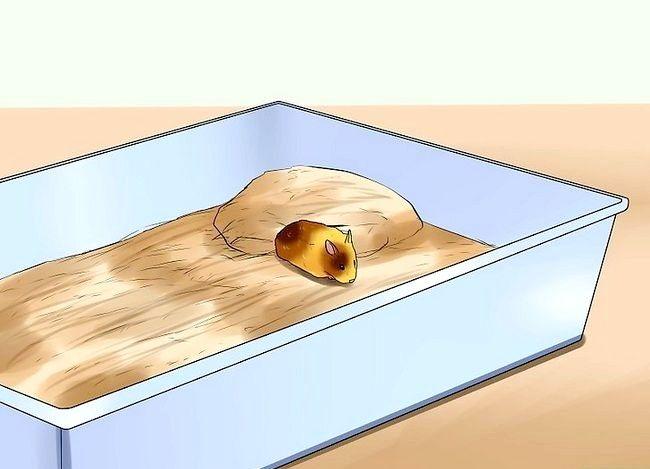 Prent getiteld Weet of jou hamster sterf Stap 3