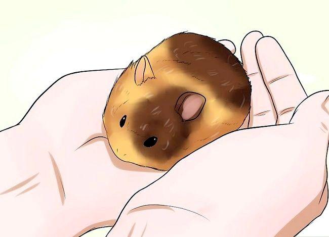 Prent getiteld Weet of jou hamster Stap 6 is