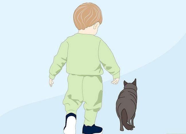 Prent getiteld Weet of `n kind allergies is vir katte Stap 1