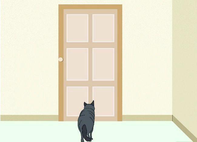 Prent getiteld Weet of `n kind allergies is vir katte Stap 7Bullet1