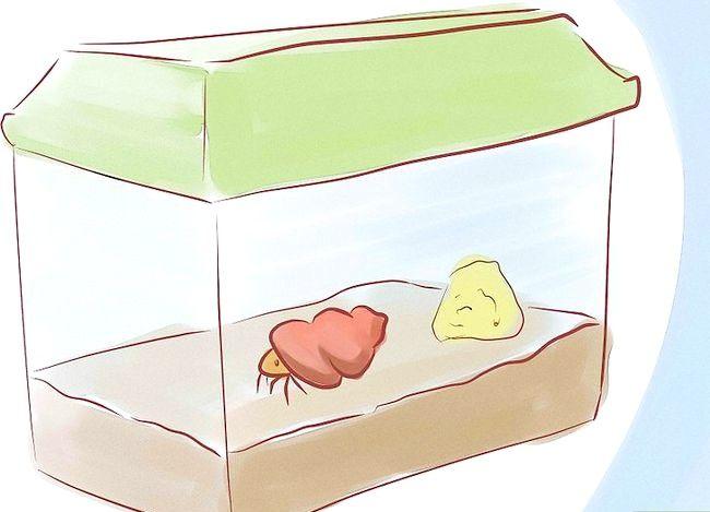 Prent getiteld Sê of `n Hermit Crab Siek Stap 3 is