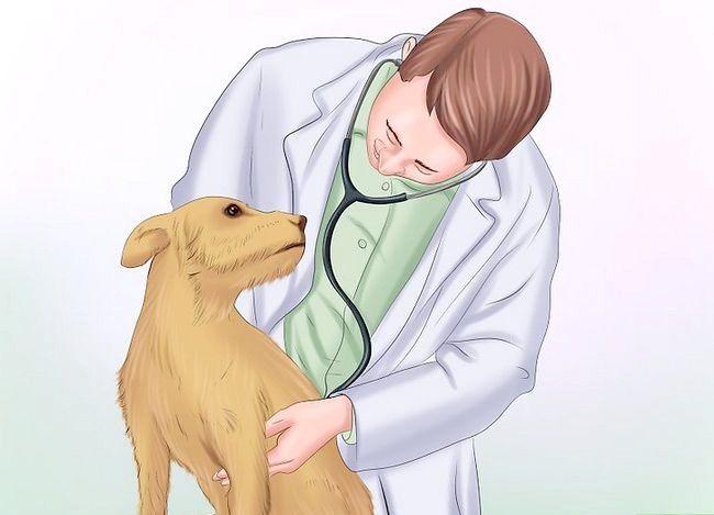 Prent getiteld Diabetes in honde Bespeur Stap 1
