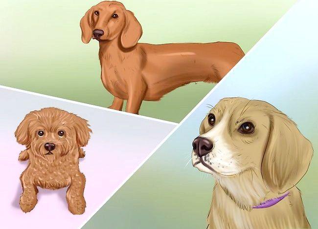 Prent getiteld Diabetes in Honde Bespeur Stap 3