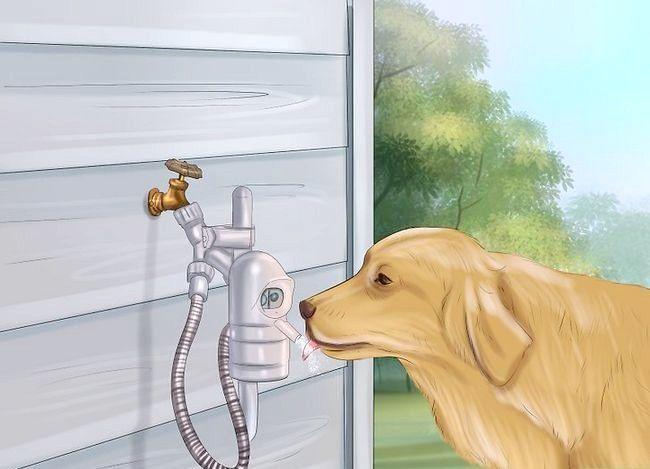 Beeld getiteld Ontdek Diabetes in Honde Stap 4