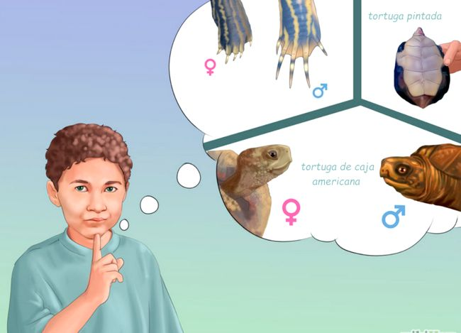 Prent getiteld Tell_if_a_Turtle_Is_Male_or_Female_Step_8