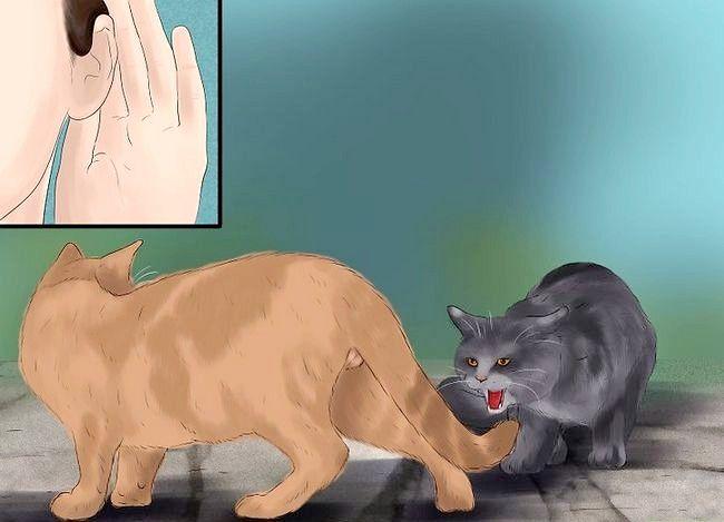 Prent getiteld Weet of Katte speel Stap 1 of veg