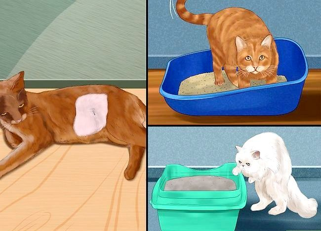Prent getiteld Weet of Katte speel Stap 13 of veg