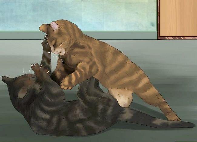 Prent getiteld Weet of Katte speel Stap 3 of veg