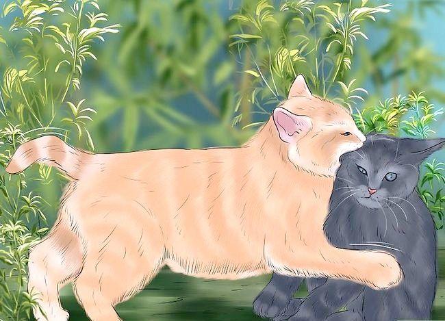 Prent getiteld Weet of Katte Stap 4 speel of veg