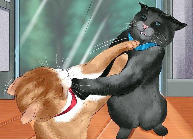 Prent getiteld Weet of katte speel Stap 5 of veg