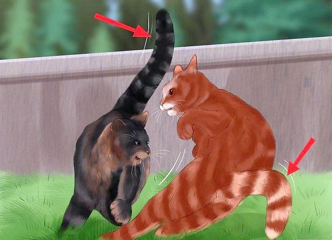 Prent getiteld Weet of Katte speel Stap 6 of veg