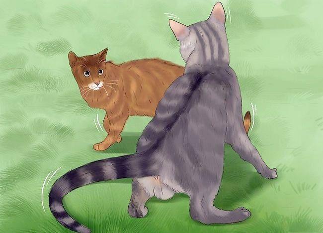 Prent getiteld Weet of katte speel of veg vir stap 8