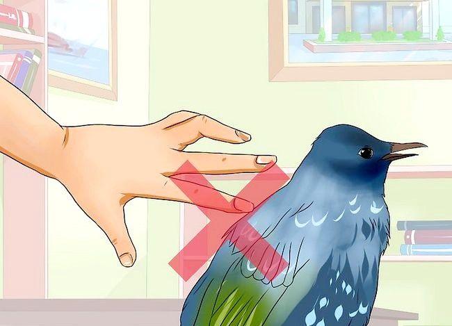 Prent getiteld Chase a Bird uit `n afgeslote veranda of `n huis Stap 8