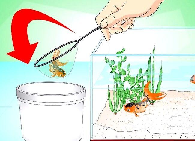 Prent getiteld Stoor `n sterwende goudvis Stap 1
