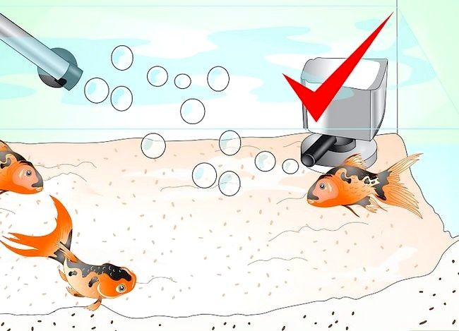 Prent getiteld Stoor `n sterwende goudvis Stap 14