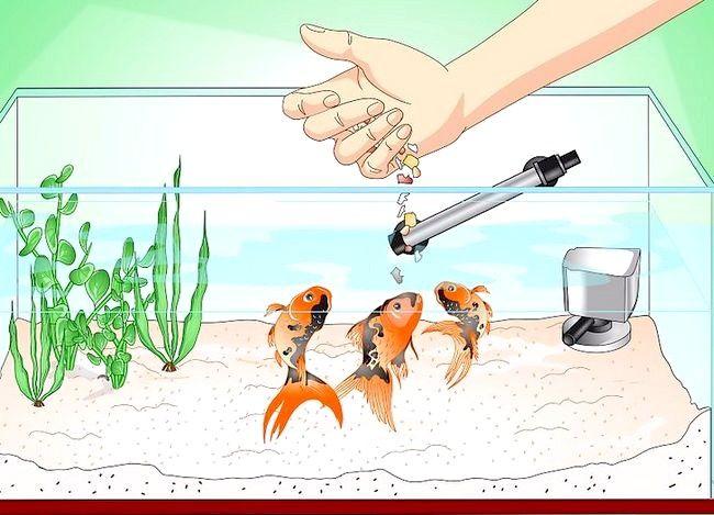 Prent getiteld Stoor `n sterwende goudvis Stap 16