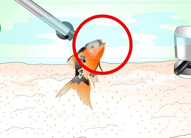 Prent getiteld Stoor `n sterwende goudvis Stap 5