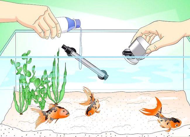 Prent getiteld Stoor `n sterwende goudvis Stap 7