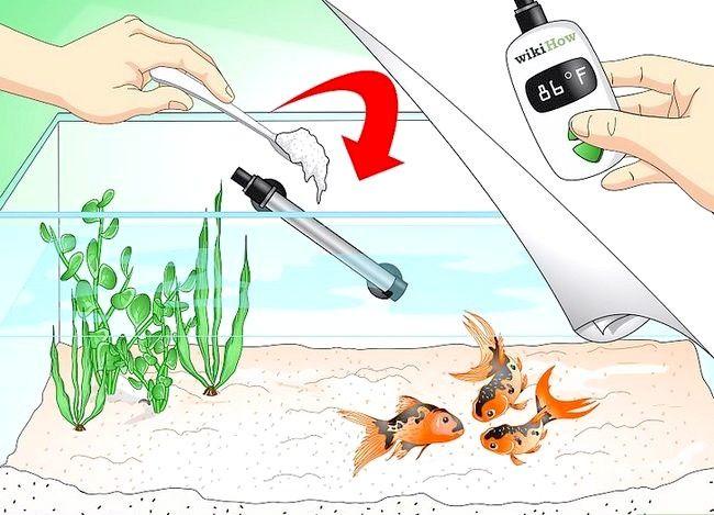 Prent getiteld Stoor `n sterwende goudvis Stap 8