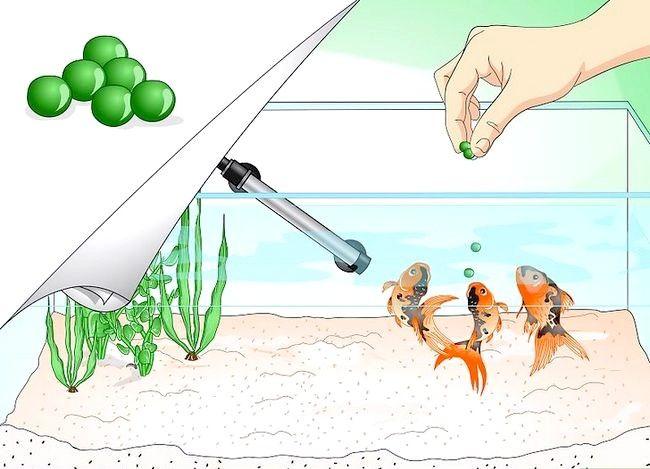 Prent getiteld Stoor `n sterwende goudvis Stap 9